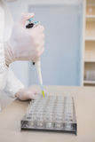 Scientist injecting tubes Stock Images