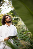 Scientist inspecting plants at greenhouse. Male scientist inspecting plants while holding tablet computer at greenhouse Stock Photography