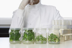 Scientist With Jars Containing Plant Material Stock Images