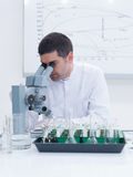 Scientist lab experiment Stock Photography