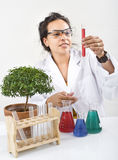 Scientist lab plant. Hispanic woman scientist in lab with plant Royalty Free Stock Photo