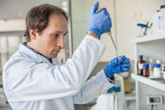 Scientist in the laboratory filling test tubes with pipette. Male scientist in the medical laboratory filling test tubes with pipette. Close up Stock Images