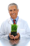 Scientist with laboratory grown plant Royalty Free Stock Image