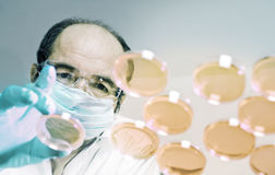 Scientist launches cell culture dishes. Scientist launches cell culture experiment Stock Photography