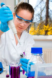 Scientist loads sample into plastic tube Stock Photography