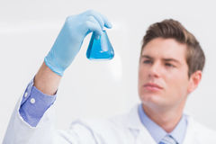 Scientist looking attentively at the beaker. In laboratory royalty free stock photo