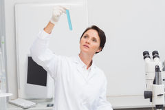 Scientist looking attentively at test tube Stock Images