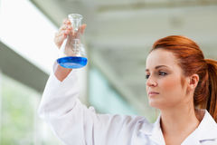 Scientist looking at a blue liquid Stock Photography