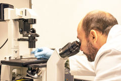 Scientist is looking at cells under a microscope. Young scientist checks experiment results under the microscope Stock Photography