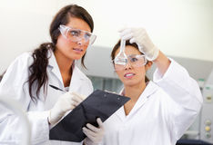 Scientist looking at a Erlenmeyer flask Stock Photography