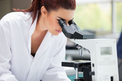 Scientist looking into a microscope Royalty Free Stock Photography