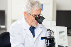 Scientist Looking Into Microscope In Laboratory. Confident senior male scientist looking into microscope in laboratory Stock Images
