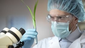 Scientist looking at plant, made scientific breakthrough in biology, innovation. Stock photo stock photography