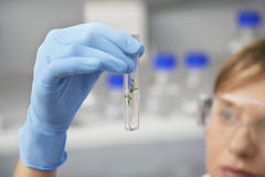Scientist Looking At Plants In Test Tube Royalty Free Stock Images