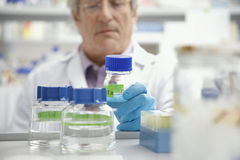 Scientist Looking At Specimen Bottle In Laboratory Stock Images