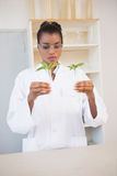 Scientist looking at sprouts in test tube Royalty Free Stock Photography