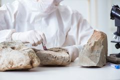 The scientist looking and stone samples in lab. Scientist looking and stone samples in lab Stock Photography