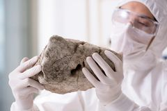 The scientist looking and stone samples in lab. Scientist looking and stone samples in lab Stock Image