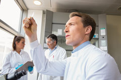 Scientist looking at test slide. At the laboratory Royalty Free Stock Images