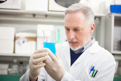 Scientist looking at a test tube Royalty Free Stock Photos