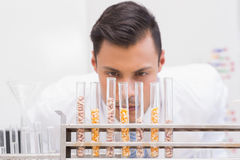 Scientist looking at tubes of corn and kernel Stock Photo