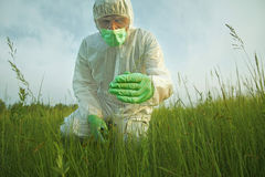 Scientist man examining green plants on summer field Royalty Free Stock Photography