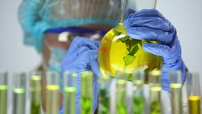 Scientist marking flask with plant in yellow preserving liquid experiment result. Stock footage stock video