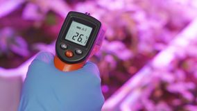 The scientist measures the temperature in the greenhouse with experimental plants using a remote infrared pyrometer.  stock video
