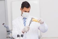 Scientist measuring corn Stock Photos