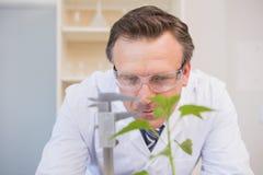 Scientist measuring plants Stock Photo
