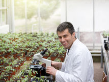 Scientist with microscope in green house Royalty Free Stock Image