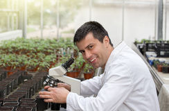 Scientist with microscope in green house Royalty Free Stock Photo