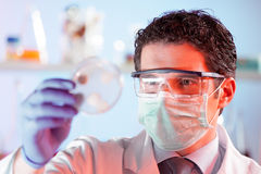 Scientist observing petri dish. Stock Image