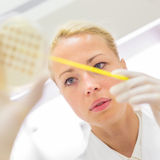 Scientist observing petri dish. Royalty Free Stock Image