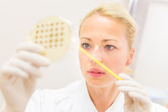 Scientist observing petri dish. Stock Photography