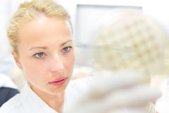 Scientist observing petri dish. Royalty Free Stock Photos