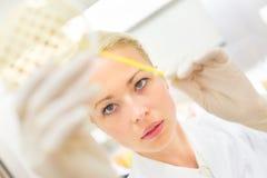 Scientist observing petri dish. Stock Image