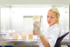 Scientist observing petri dish. Royalty Free Stock Photography