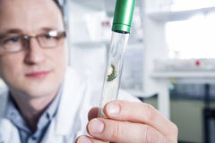 Scientist observing test tube at the laboratory Royalty Free Stock Photos