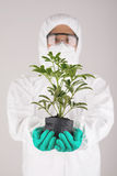 Scientist with plant Stock Photography