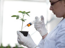 Scientist pouring chemistry into flower pot Stock Image