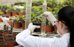 Scientist pouring chemistry into flower pot Stock Photo