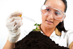 Scientist pouring liquid on plant Royalty Free Stock Photos