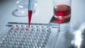 The scientist pours the reagents on test tubes. Concept - biochemical analyzes, tests, experiments, genetics, immunology