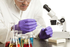 Scientist Preparing Slide Royalty Free Stock Photography