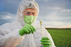 Scientist put in flask the green plant Royalty Free Stock Images