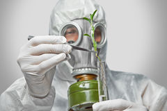 Scientist puts green plant in flask Stock Image