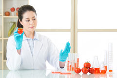 Scientist research and develop healthy genetic modification food Royalty Free Stock Images