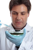 Scientist researcher testing analysing lab work Stock Image
