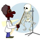 Scientist and skeleton Stock Photos